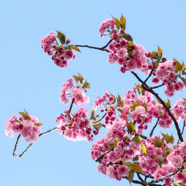 學日文、日檢技巧:文字語彙