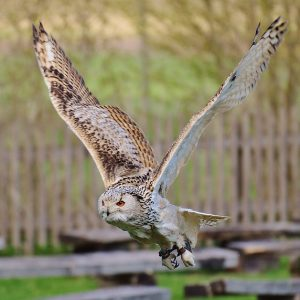 owl-1329488_640